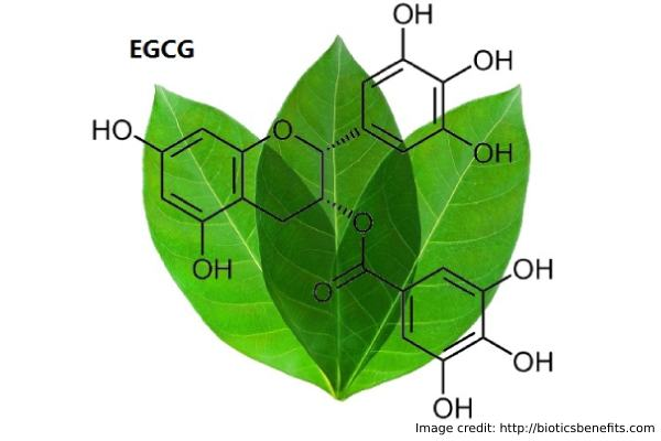Active Ingredient EGCG